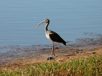 j-n-ding-darling-national-wildlife-refuge-sanibel-island