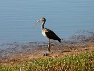 """J. N. """"Ding"""" Darling National Wildlife Refuge Sanibel Island"""