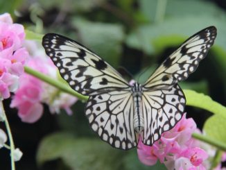 The Butterfly Estates Fort Myers