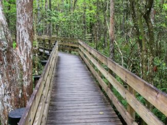 Six Mile Cypress Slough Preserve in Fort Myers