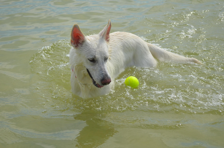 Ein Hund in Florida