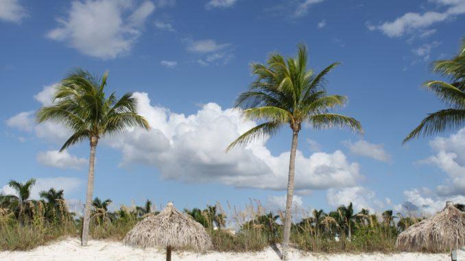 Palmen in Florida